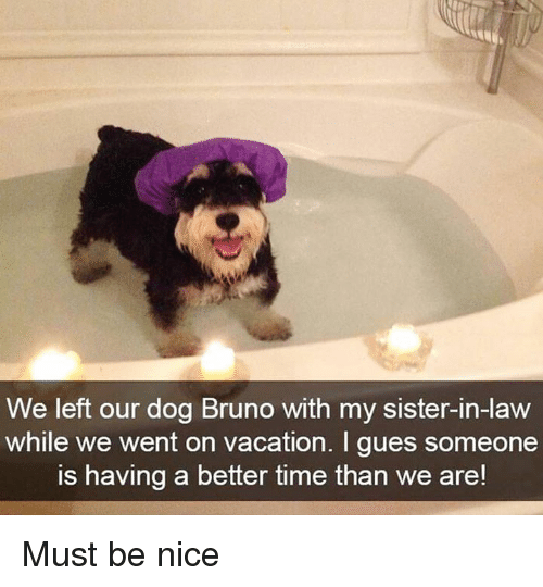 Memes Time And Vacation We Left Our Dog Bruno With My Sister