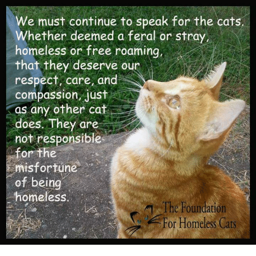 Homeless, Memes, and Respect: We must continue to speak for the cats.  Whether deemed a feral or stray,  homeless or free roaming,  that they deserve our  respect, care, and  compassion, Jus  as any other cat  CA  does. They are  not responsible  for the  misfortune  of being  homeless  The Foundation  For Homeless Cats