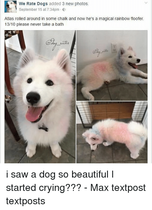 we rate dogs added 3 new photos september 15 at 29791383 ✅ 25 best memes about take a bath take a bath memes