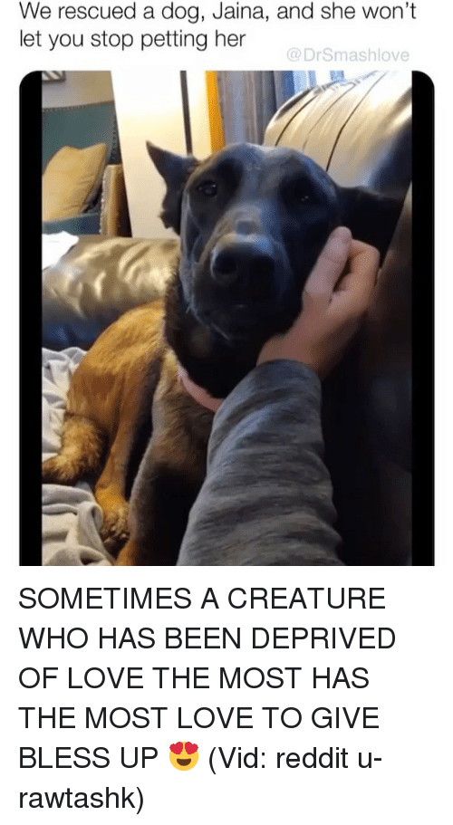 Bless Up, Love, and Memes: We rescued a dog, Jaina, and she won't  let you stop petting her  @DrSmashlove SOMETIMES A CREATURE WHO HAS BEEN DEPRIVED OF LOVE THE MOST HAS THE MOST LOVE TO GIVE BLESS UP 😍 (Vid: reddit u-rawtashk)