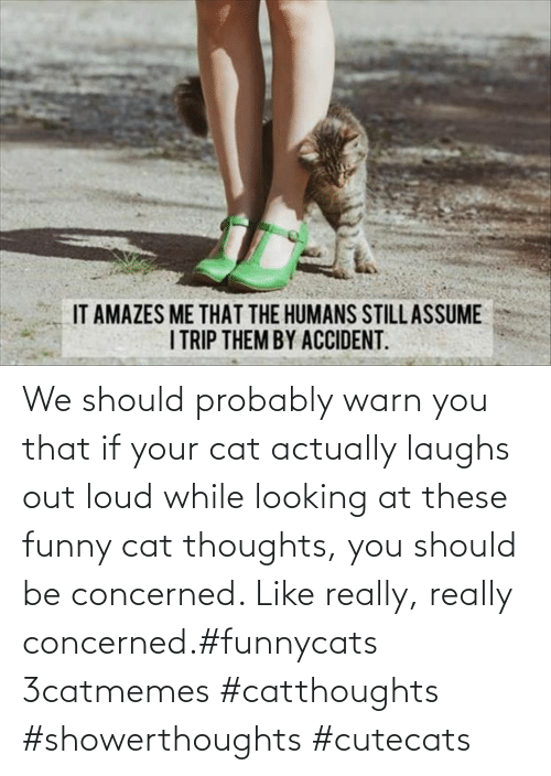 Funny, Cat, and Looking: We should probably warn you that if your cat actually laughs out loud while looking at these funny cat thoughts, you should be concerned. Like really, really concerned.#funnycats 3catmemes #catthoughts #showerthoughts #cutecats