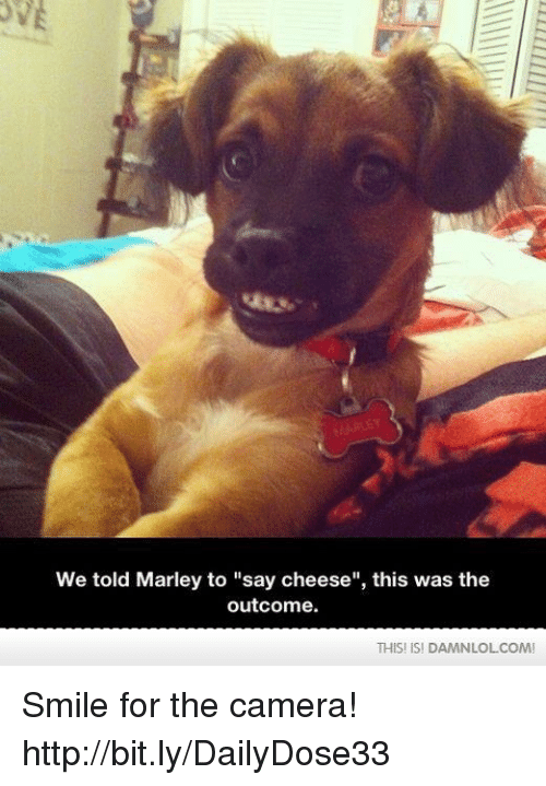"""Memes, Camera, and Http: We told Marley to """"say cheese'', this was the  outcome.  THISI ISI DAMN LOLCOM! Smile for the camera!  http://bit.ly/DailyDose33"""