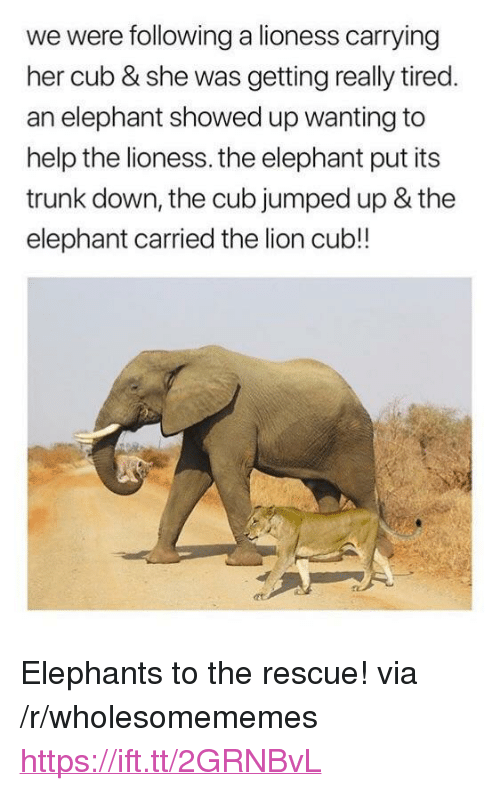 """Elephant, Help, and Lion: we were following a lioness carrying  her cub & she was getting really tired  an elephant showed up wanting to  help the lioness. the elephant put its  trunk down, the cub jumped up & the  elephant carried the lion cub!! <p>Elephants to the rescue! via /r/wholesomememes <a href=""""https://ift.tt/2GRNBvL"""">https://ift.tt/2GRNBvL</a></p>"""