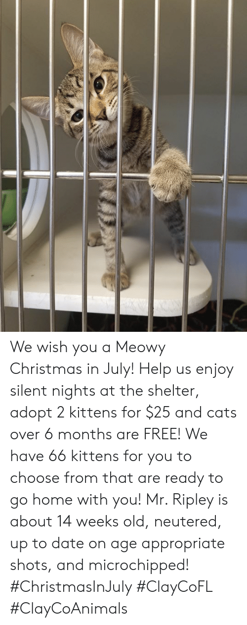 Christmas In July Cat Meme.We Wish You A Meowy Christmas In July Help Us Enjoy Silent