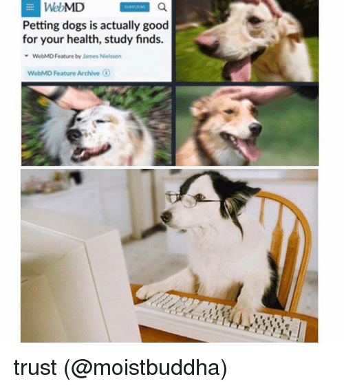 Memes, webMD, and 🤖: WebMD  Petting dogs is actually good  for your health, study finds.  Feature by James Nielssen  WebMD Feature Archive  O trust (@moistbuddha)