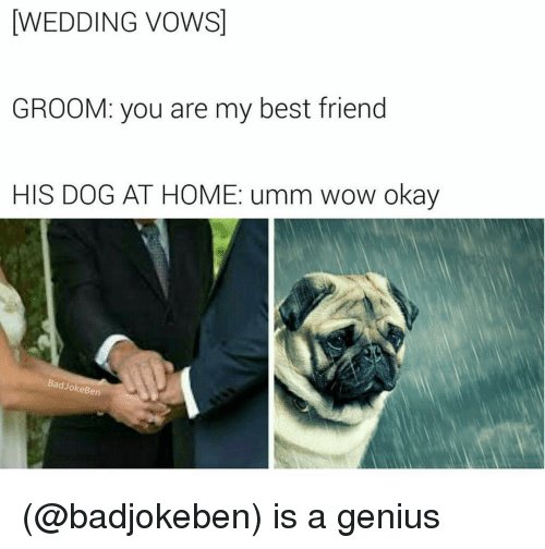 Genius Dank Memes And Wedding Vows Groom You Are My
