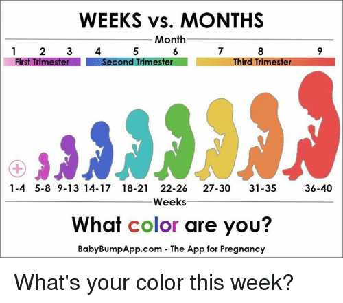 weeks vs months month first trimester second trimester third