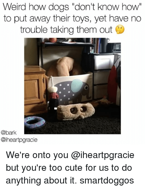 "Cute, Dogs, and Memes: Weird how dogs ""don't know how  to put away their toys, yet have no  trouble taking them out  @bark  @iheartpgracie We're onto you @iheartpgracie but you're too cute for us to do anything about it. smartdoggos"