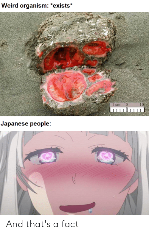 Reddit, Weird, and Japanese: Weird organism: *exists*  1 cm 5  10  Japanese people: And that's a fact