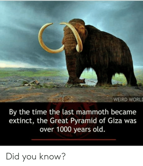 Weird, Time, and Old: WEIRD WORL  By the time the last mammoth became  extinct, the Great Pyramid of Giza was  over 1000 years old. Did you know?