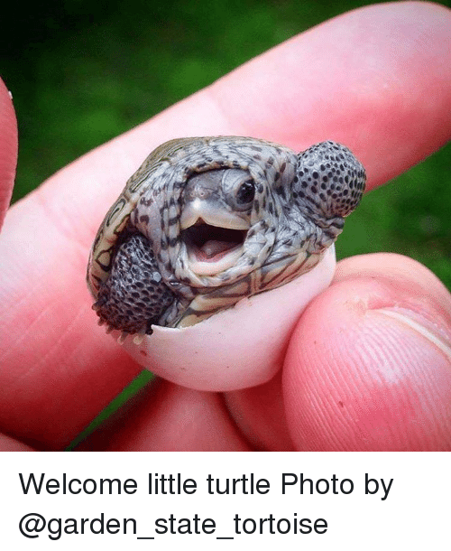Memes, Garden State, and Little Turtle: Welcome little turtle  Photo by @garden_state_tortoise
