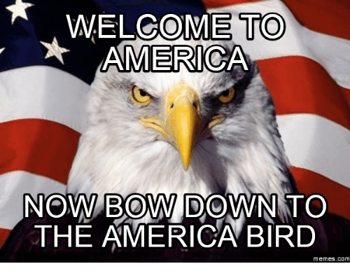 welcome to america now bow down to the america bird 9545726 welcome to america now bow down to the america bird memes com,Get Bow Down Meme