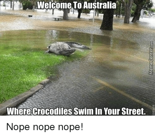 Image result for crocodile memes