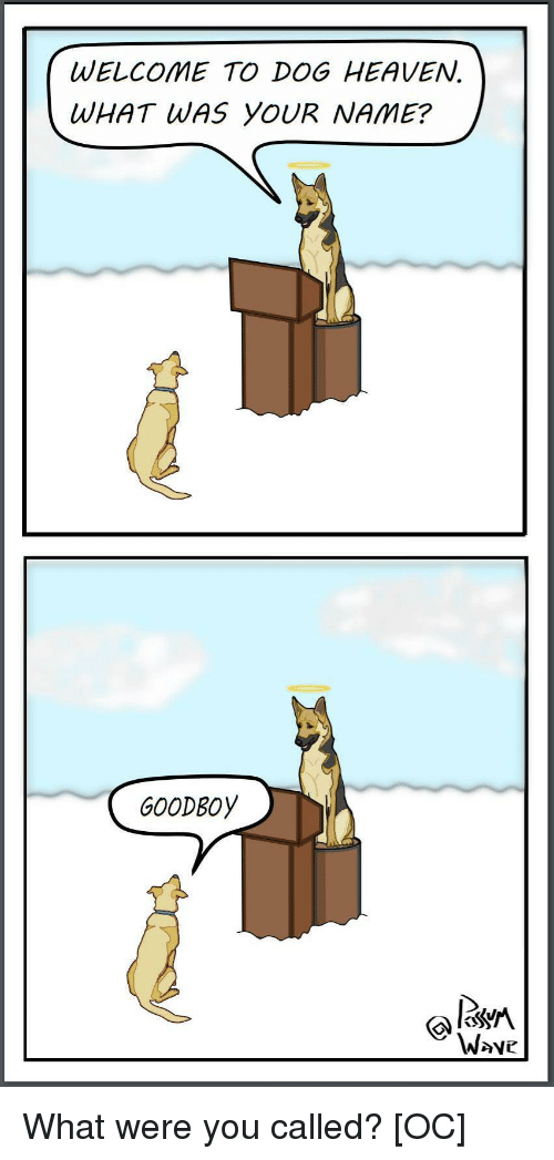 Heaven, Dog, and Name: WELCOME TO DOG HEAVEN.  WHAT WAS YOUR NAME?  GOODBOy  W>ve What were you called? [OC]