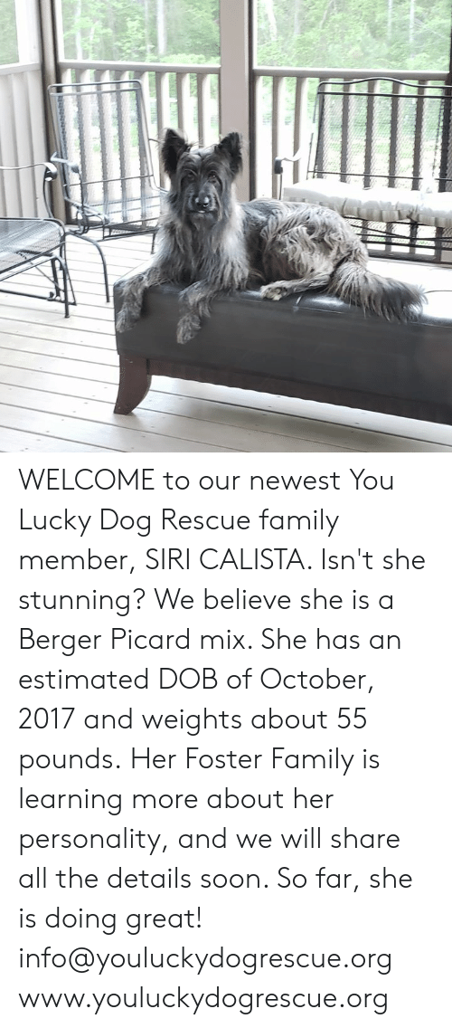 WELCOME to Our Newest You Lucky Dog Rescue Family Member