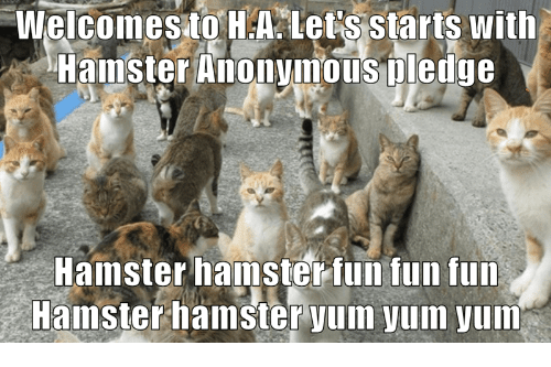 Anonymous, Hamster, and Fun: Welcomesto H.A let's starts with  Hamster Anonymous Tledge  Hamster hamster fun fun fun  Hamsterhamster yum yum yum