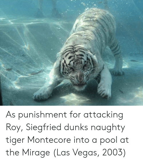 Las Vegas, Las Vegas, and Pool: weliparku As punishment for attacking Roy, Siegfried dunks naughty tiger Montecore into a pool at the Mirage (Las Vegas, 2003)