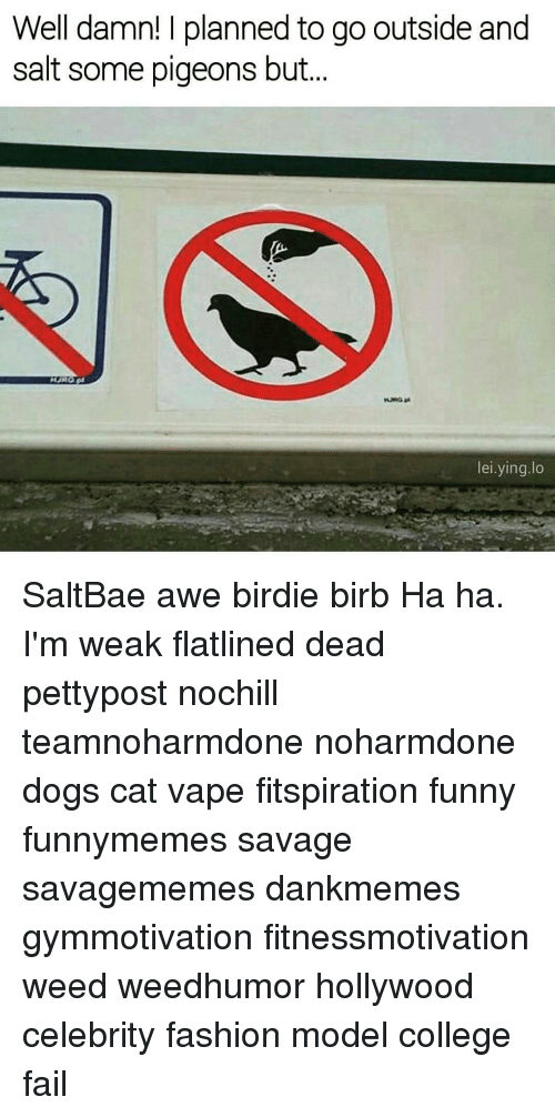 Memes, 🤖, and Weeds: Well damn! planned to go outside and  salt some pigeons but  lei ying lo SaltBae awe birdie birb Ha ha. I'm weak flatlined dead pettypost nochill teamnoharmdone noharmdone dogs cat vape fitspiration funny funnymemes savage savagememes dankmemes gymmotivation fitnessmotivation weed weedhumor hollywood celebrity fashion model college fail