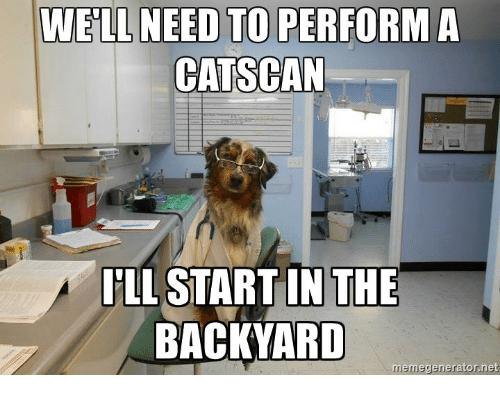 well need to perform a catscan in the backyard meme 21741790 ✅ 25 best memes about battery meme battery memes