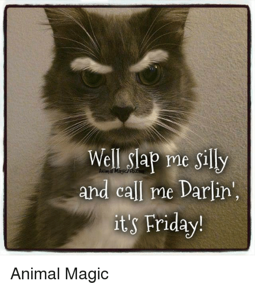 well slap me sily and call me darlin its friday 5992382 ✅ 25 best memes about friday animal friday animal memes