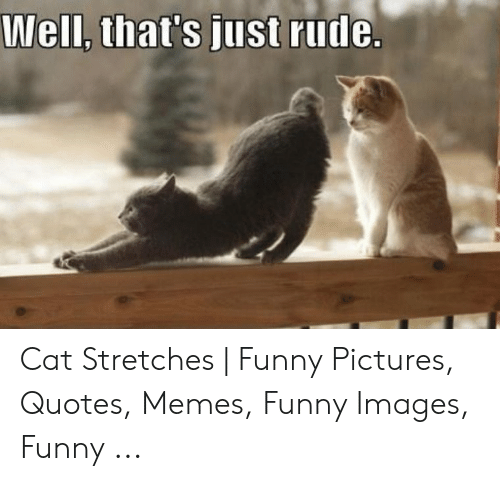 Well Thats Just Rude Cat Stretches Funny Pictures Quotes