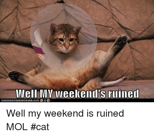 Well V Weekend's Ruined Well My Weekend Is Ruined MOL #Cat