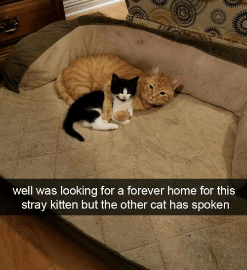 Memes, Forever, and Home: well was looking for a forever home for this  stray kitten but the other cat has spoken