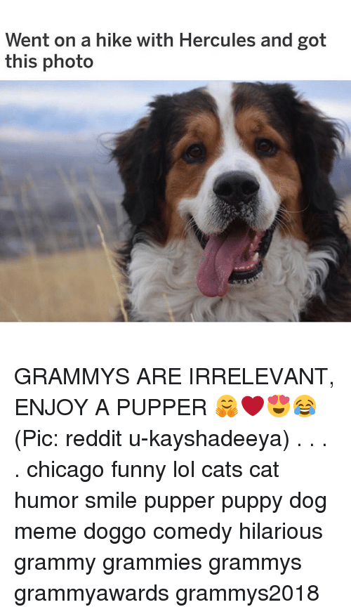 Cats, Chicago, and Funny: Went on a hike with Hercules and got  this photo GRAMMYS ARE IRRELEVANT, ENJOY A PUPPER 🤗❤️😍😂 (Pic: reddit u-kayshadeeya) . . . . chicago funny lol cats cat humor smile pupper puppy dog meme doggo comedy hilarious grammy grammies grammys grammyawards grammys2018