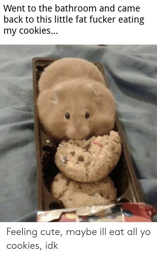 Cookies, Cute, and Reddit: Went to the bathroom and came  back to this little fat fucker eating  my cookies Feeling cute, maybe ill eat all yo cookies, idk