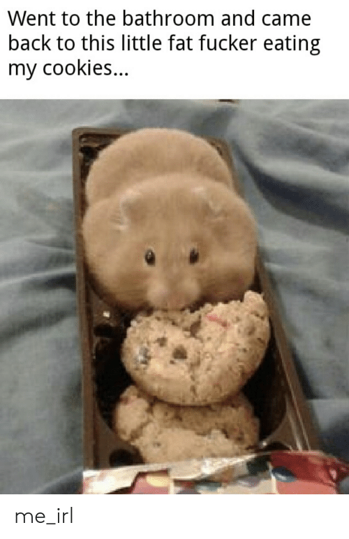 Cookies, Fat, and Irl: Went to the bathroom and came  back to this little fat fucker eating  my cookies me_irl