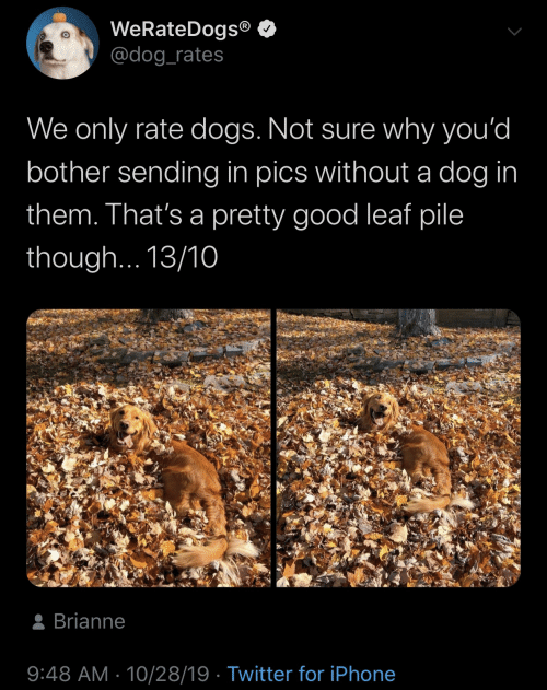 Dogs, Iphone, and Twitter: WeRateDogs®  @dog_rates  We only rate dogs. Not sure why you'd  bother sending in pics without a dog in  them. That's a pretty good leaf pile  though... 13/10  8 Brianne  9:48 AM · 10/28/19 · Twitter for iPhone