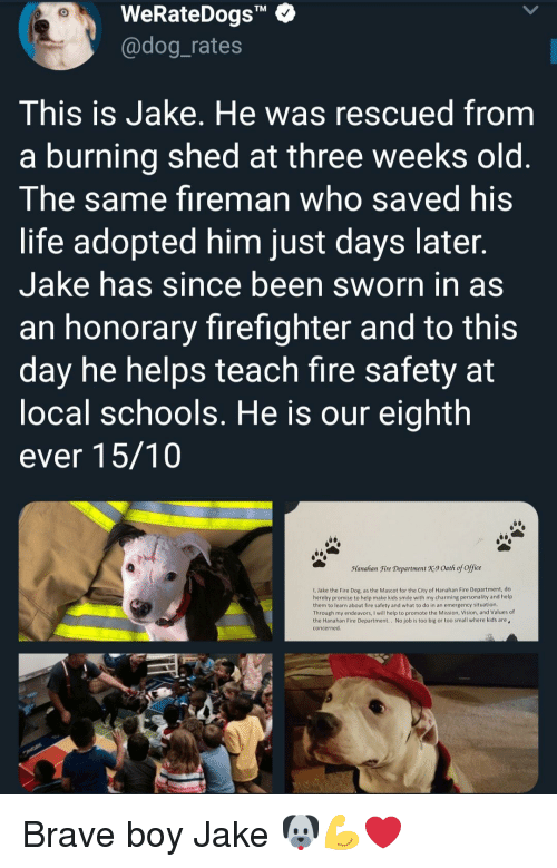 """Fire, Life, and Vision: WeRateDogs""""  @dog_rates  TM  This is Jake. He was rescued from  a burning shed at three weeks old  The same fireman who saved his  life adopted him just days later  Jake has since been sworn in as  an honorary firefighter and to this  day he helps teach fire safety at  ocal schools. He is our eighth  ever 15/10  Manahan Fire Department X9 Oath of office  1, Jake the Fire Dog, as the Mascot for the City of Hanahan Fire Department, do  hereby promise to help make kids smile with my charming personality and help  them to learn about fire safety and what to do in an emergency situation  Through my endeavors, I will help to promote the Mission, Vision, and Values of  the Hanahan Fire Department.. No job is too big or too small where kids are  concerned Brave boy Jake 🐶💪❤"""