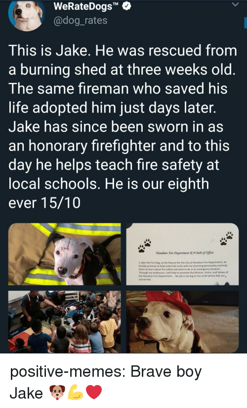 """Fire, Life, and Memes: WeRateDogs""""  @dog_rates  TM  This is Jake. He was rescued from  a burning shed at three weeks old  The same fireman who saved his  life adopted him just days later  Jake has since been sworn in as  an honorary firefighter and to this  day he helps teach fire safety at  ocal schools. He is our eighth  ever 15/10  Manahan Fire Department X9 Oath of office  1, Jake the Fire Dog, as the Mascot for the City of Hanahan Fire Department, do  hereby promise to help make kids smile with my charming personality and help  them to learn about fire safety and what to do in an emergency situation  Through my endeavors, I will help to promote the Mission, Vision, and Values of  the Hanahan Fire Department.. No job is too big or too small where kids are  concerned positive-memes:  Brave boy Jake 🐶💪❤"""