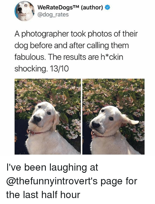 Funny, Been, and Page: WeRateDogsTM (author) +  @dog_rates  A photographer took photos of their  dog before and after calling them  fabulous. The results are h*ckin  shocking. 13/10 I've been laughing at @thefunnyintrovert's page for the last half hour