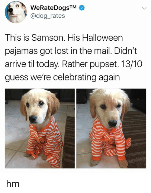 Halloween, Lost, and Guess: WeRateDogsTM  @dog_rates  This is Samson. His Halloween  pajamas got lost in the mail. Didn't  arrive til today. Rather pupset. 13/10  guess we're celebrating again hm
