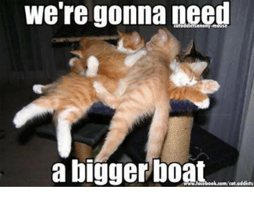 were gonna need a bigger boat cat addicts 14709678 ✅ 25 best memes about bigger boat bigger boat memes,Boat Meme