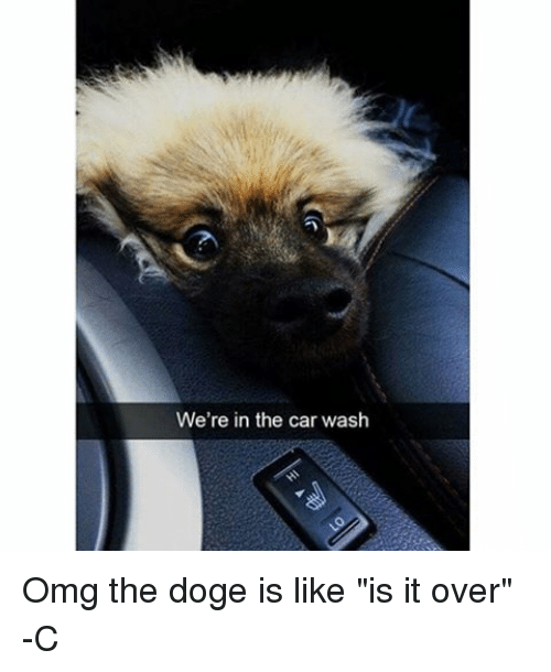 """Doge, Memes, and Omg: We're in the car wash Omg the doge is like """"is it over"""" -C"""