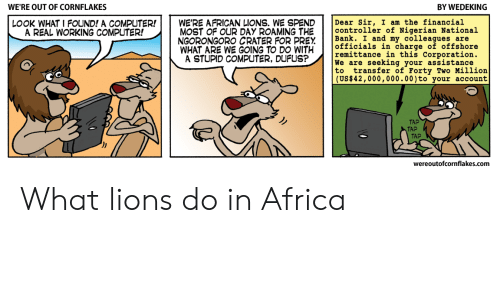 Africa, Computer, and Lions: WE'RE OUT OF CORNFLAKES  BY WEDEKING  LOOK WHAT I FOUND! A COMPUTER!WE'RE AFRICAN LIONS. WE SPENDDear Sir, I am the financial  A REAL WORKING COMPUTER!  MOST OF OUR DAY ROAMING THE controller of Nigerian National  NGORONGORO CRATER FOR PREYBank. I and my colleagues are  officials in charge of offshore  remittance in this Corporation.  We are seeking your assistance  to transfer of Forty Two Million  (US$42,000,000.00)to your account  WHAT ARE WE GOING TO DO WITHicha  A STUPID COMPUTER, DUFUS?  TAP  TAP  TAP  wereoutofcornflakes.com What lions do in Africa