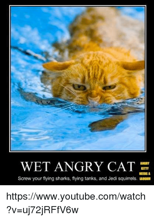wet angry cat kitty needs a screw your flying sharks 7673679 ✅ 25 best memes about wet angry cat wet angry cat memes