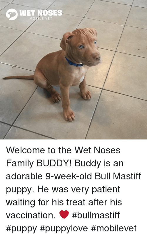 Wet Noses Mobile Vet Welcome To The Wet Noses Family Buddy Buddy Is