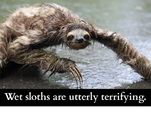 wet-sloths-are-utterly-terrifying-546750