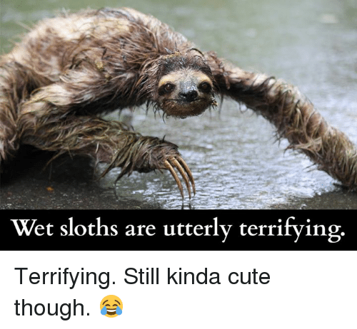 wet sloths are utterly terrifying terrifying still kinda cute though 5141977 ✅ 25 best memes about baby sloths baby sloths memes