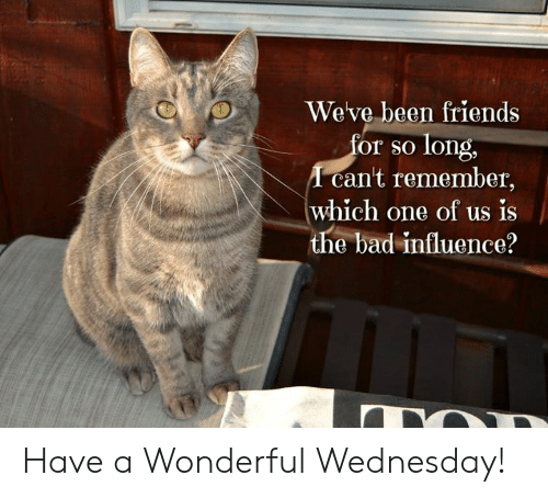 Bad, Friends, and Memes: Weve been friends  or so long,  cant remember,  which one of us is  the bad influence? Have a Wonderful Wednesday!