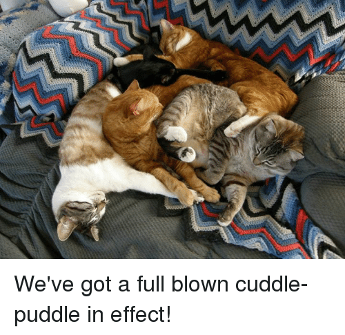 I Want To Cuddle With You Quotes: 25+ Best Memes About Cuddle Puddle