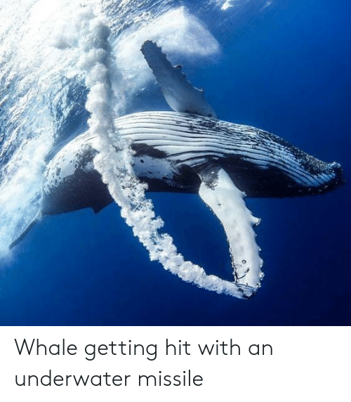 Whale Getting Hit With an Underwater Missile | Whale Meme on