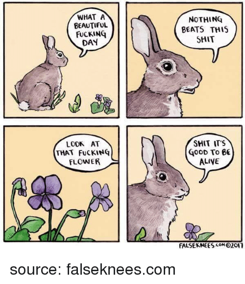 Alive, Beautiful, and Fucking: WHAT A  BEAUTIFUL  FUCKING  DAY  NOTHING  BEATS THIS  SHIT  LOOK AT  THAT FuCKING  FLOWER  SMIT ITS  GOOD To 6  ALIVE  FALSEKNEESM201 source: falseknees.com