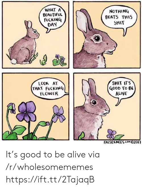 Alive, Beautiful, and Fucking: WHAT A  BEAUTIFUL  FUCKING  DAY  NOTHING  BEATS THIS  SHIT  SMIT ITS  LOOK AT  THAT FuCKINQ  FLOWER  GooD To eE  ALIVE  FALSEKNEES com 02or It's good to be alive via /r/wholesomememes https://ift.tt/2TajaqB