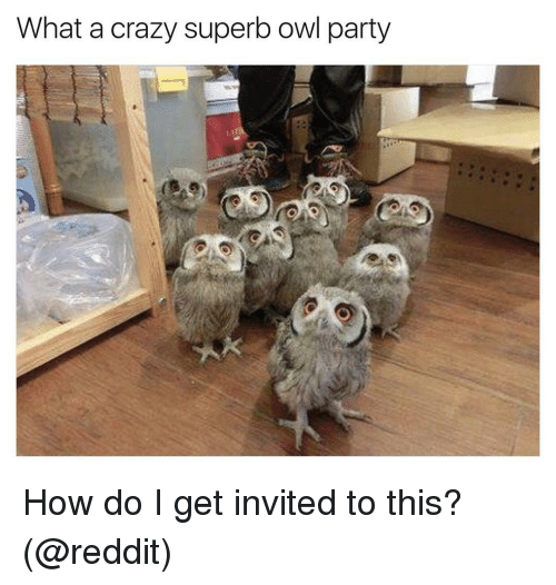 Funny, Superb, and Owl: What a crazy superb owl party How do I get invited to this? (@reddit)