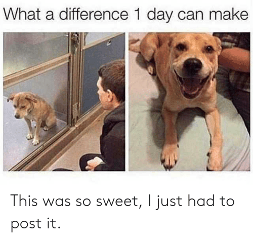 Can, Day, and Make: What a difference 1 day can make This was so sweet, I just had to post it.