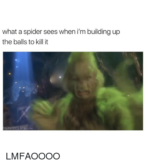 Spider, Girl Memes, and Com: what a spider sees when i'm building up  the balls to kill it  MOVIECLIPS.cOM LMFAOOOO